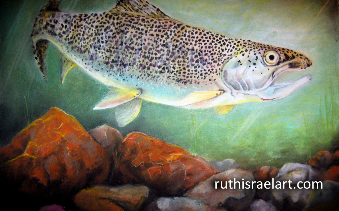 trout wallpaper free backgrounds - photo #9